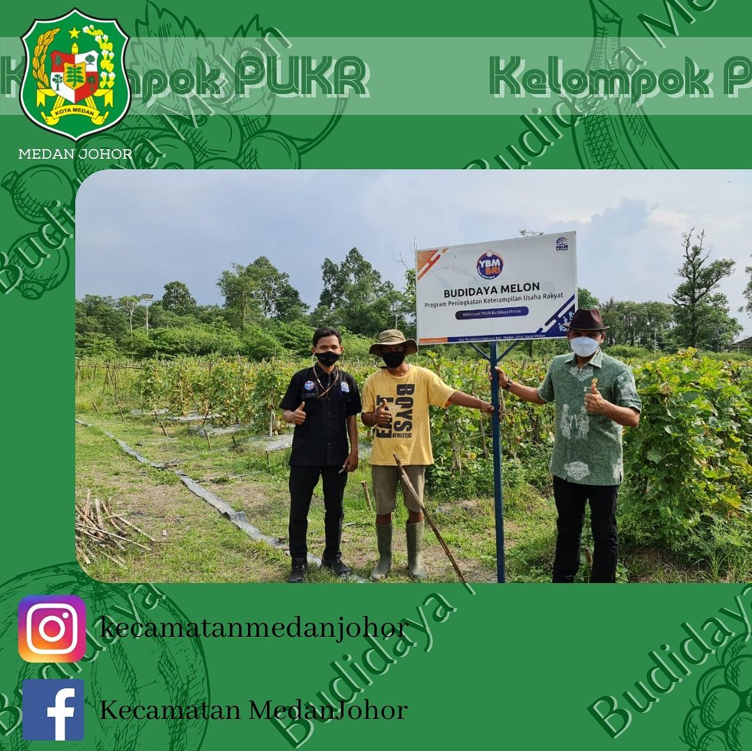 Kelompok PKUR (Program Peningkatan Ketrampilan Usaha Rakyat) sedang melakukan Panen Dihadiri Oleh Camat Medan Johor Bapak Zulfakhri Ahmadi S.Sos